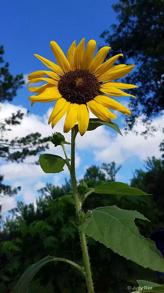 Reaching For The Sun - ID: 15530241 © Judy Rae